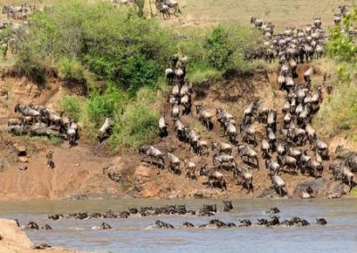 serengeti wildebeast migration