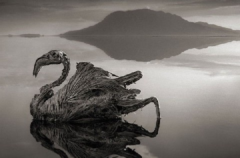 Tanzanian Holiday in Lake Natron