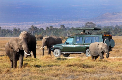 Everything You Need To Know About The Ngorongoro Crater