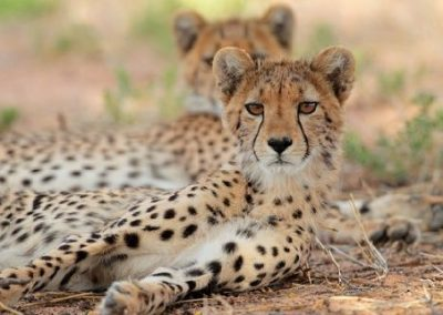 2 day Budget South Tanzania Safari