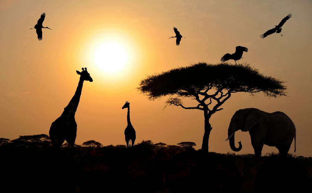 Top 5 Reasons For a Tanzanian Holiday
