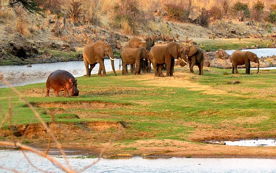 Day In Ruaha National Park