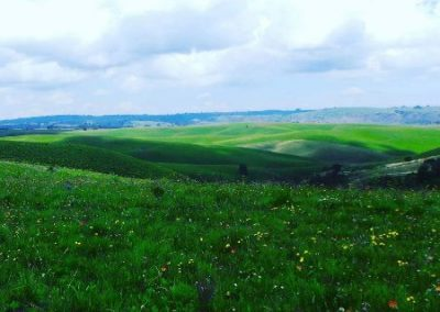 kitulo parkthe beautifully